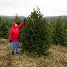 Types Of Christmas Trees Canada by Types Of Trees Galehouse Tree Farm