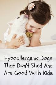 hypoallergenic dogs that don t shed are good with kids dog