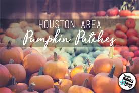 Pumpkin Patch Pasadena Area by 2017 Houston Pumpkin Patch Round Up