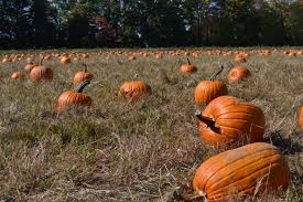 Oklahoma Pumpkin Patches 2015 by Our Delicious Life 2015
