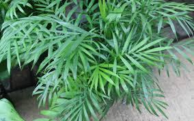 pflanzen im schlafzimmer wohlige träume sind garantiert