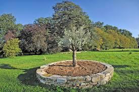emejing planter une olive contemporary transformatorio us