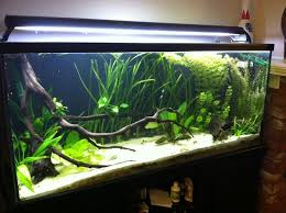 225 best Aquarium images on Pinterest