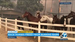 Race Horses Freed From Burning Barn | ABC7 - YouTube Peasants Fleeing A Burning Barn Detroit Institute Of Arts Museum 11510 Music Street 3200 Sqft House 50 Acres Adjoins State Park Firefighters Tackling Barn Fire Which Has Been Burning Overnight Men Run Into To Save Horses Trapped By California Iconic Central Whidbey Burns To Ground Newstimes Free Image Peakpx Rocket Explodes Aborting Nasa Mission Resupply Space Station Planet In The Sky Wallpaper Wallpapers 48722 Evil Within Blood Man Fight Chapter 9 Youtube Jacob Aiello New Ldon Fire Company Prince Edward Island