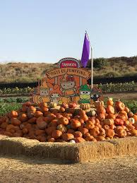 Irvine Pumpkin Patch Tanaka by Pumpkin Patches You Should Visit This Season In La And Orange
