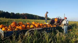 Fall Orchards and Goo s Cadillac Michigan Travel and Tourism