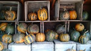 Omaha Area Pumpkin Patch by On The Farm Valas