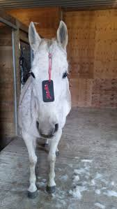 Horse Hair Shedding Tool by 344 Best Le Cheval Au Naturel Images On Pinterest Health News