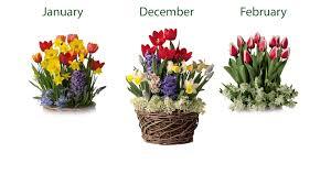 three months of flower bulb gift gardens sku 8058 plow hearth