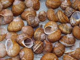 Do Hermit Crabs Shed Shell by How To Care For A Molting Hermit Crab Pethelpful