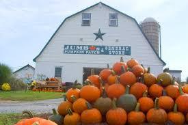 Sauvies Island Pumpkin Patch Corn Maze by Best Pumpkin Patches In America Jetset