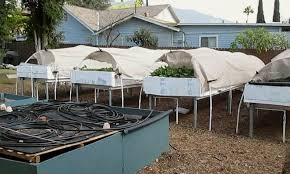 How To Make A Living From Suburban Backyard Aquaponics Video
