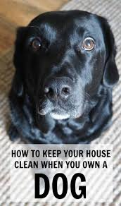 Dogs That Shed Hair how to keep your house clean when you have a dog tips on