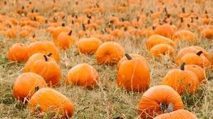 Pittsburgh Area Pumpkin Patches by Top Pumpkin Patches In Philadelphia Cbs Philly