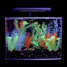 Spongebob Aquarium Decor Set by Glofish 3 Gallon Aquarium Kit Aquariums And Fish Tanks