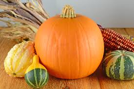 Types Of Pumpkins For Baking by Pumpkin Puree Savory Experiments