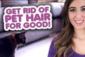 Best Fabric For Sofa With Dogs by Get Rid Of Pet Hair For Good Clean My Space