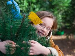 Leyland Cypress Christmas Tree Farm by 5 Southern Christmas Tree Farms Southern Living