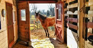 Fly Control Strategies For Your Barn   Absorbine Defeat The Enemy Fly Control Options For Horse And Barn Music Calms Horses Emotional State The 1 Resource Breyer Crazy In At Schneider Saddlery Horsedvm Controlling Populations Around Oftforgotten Bot Equine Dry Lot Shelter Size Recommendations Successful Boarding Your Expert Advice On Horse 407 Best Barns Images Pinterest Dream Barn Barns A Management Necessity Owners Beat Barnsour Blues Care Predator Wasps Farm Boost Flycontrol Strategies Howto English Riders