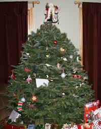 Christmas Tree Aphids by Christmas Tree Farming Throughout The Year Collopyfamilyfarm