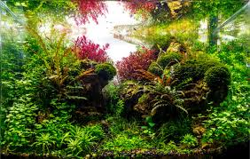 Planted Tank Happy Journey By Adil Chaouki - Aquarium Design ... Aquascaping Aquarium Ideas From Aquatics Live 2012 Part 2 Youtube How To Make Trees In Planted Aquarium The Nature Style Planted Tank Awards Ultimate Shop In Raipur Fuckyeahaquascaping My 90p Tank One Month See Day 1 Here Best 25 Ideas On Pinterest Home Design Designs Aquascape Happy Journey By Adil Chaouki 1ft Cube Aquascaping Fuck Yeah Anyone Do For Your Fish Srt Hellcat Forum Archives Javidecor