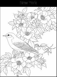 New York State Bird And Flower Coloring Pages