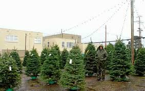 Nordmann Fir Christmas Tree Nj by Family Owned Tree Lots Open For Holiday Sales