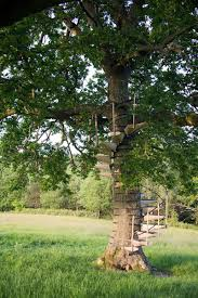 Articles With Backyard Treehouse Ideas Tag: Backyard Tree House ... This Is A Tree House Base That Doesnt Yet Have Supports Built In Tree House Plans For Kids Lovely Backyard Design Awesome 3d Model Cool Treehouse Designs We Wish Had In Our Photos Best 25 Simple Ideas On Pinterest Diy Build Beautiful Playhouse Hgtv Garden With Backyards Terrific Small Townhouse Ideas Treehouse Labels Projects Decor Home What You Make It 10 Diy Outdoor Playsets Tag Tibby Articles