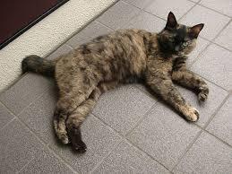 cat in house cat in japan cat in house 43 by iguru71 on deviantart