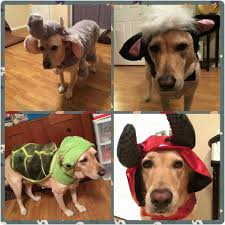 Pumpkin Patch Grapevine Southlake Tx by Dog About Town Costume Party Hopping And More Things To Do Pets