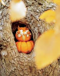 Porcupine Eating A Pumpkin Youtube by Halloween Martha Stewart
