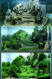 100 Aquascape Ideas