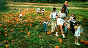 Pittsburgh Area Pumpkin Patches by Reilly U0027s Garden Center At Summer Seat Farm Closing Nov 13 The