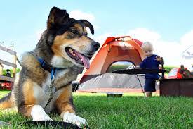 Pumpkin Patch Irvine Jeffrey by Best Pet Friendly Camping Spots In Los Angeles Cbs Los Angeles