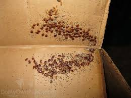 Bed Bug Control Guide Bed Bug Extermination & Killer Products