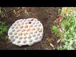 here s a really easy way to plant flower bulbs in a pattern using