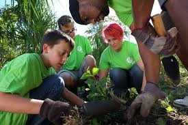 Million Trees Miami Gets Help From FPL  CBS Miami