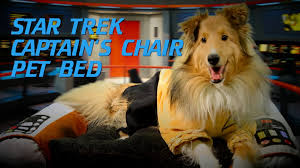 Star Trek Captains Chair by Star Trek Captain U0027s Chair Pet Bed From Thinkgeek Youtube