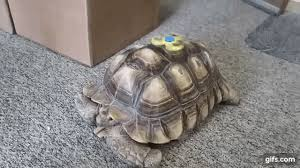 This Tortoise Is Trying Out Some Tricks With A Fidget Spinner