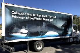 100 Game Truck San Diego Orca Is Trapped In A Semi Driving Around
