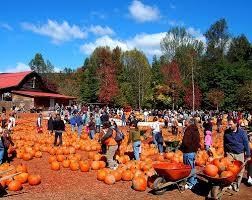 Old Mcdonalds Farm Pumpkin Patch Scottsdale by 36 Best Pumpkin Patches Images On Pinterest Pumpkin Patches
