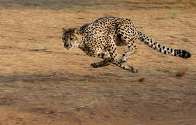 100 Cheetah Trucking Why Quick DecisionMaking Is The Name Of The Procurement Game Blog