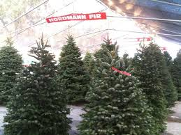 What Is The Best Christmas Tree Variety by Where To Get The Best Christmas Trees In Los Angeles Cbs Los Angeles