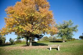 Greenwood Memorial Park Home