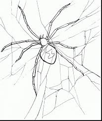 Superb Printable Spider Coloring Pages With Page