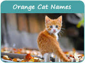 orange cat names cat names by colors names for cats of various colors