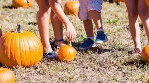 Coconut Grove Pumpkin Patch by Best Pumpkin Patches Near Miami For Families Mommy Nearest