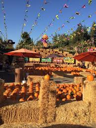 Wheatland Pumpkin Patch by 7 Charming Pumpkin Patches In Northern California That Are Picture