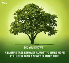 Define The Word Carbon Sink by Information A Z Worldenvironmentorganisation Weo