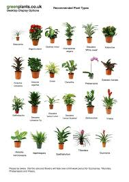 Small Plants For The Bathroom by Best 25 Office Plants Ideas On Pinterest Best Office Plants